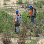 Wetland reclamation, mitigation and habitat restoration